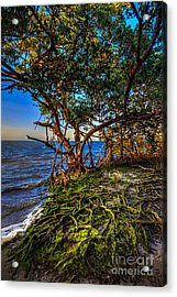 Rooted In Truth Acrylic Print by Marvin Spates