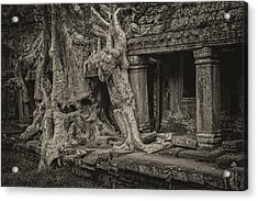 Roots In Ruins 7, Ta Prohm, 2014 Acrylic Print by Hitendra SINKAR
