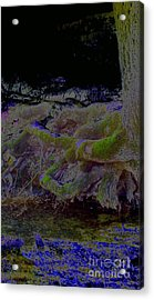 Acrylic Print featuring the photograph Roots by Karen Newell