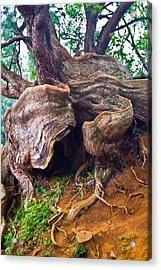 Roots Acrylic Print by Matt Radcliffe