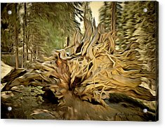 Roots Of A Fallen Giant Sequoia Acrylic Print by Barbara Snyder