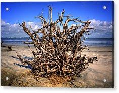 Roots On Jekyll Island Acrylic Print