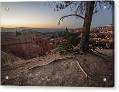 Roots On The Rim 1 Acrylic Print