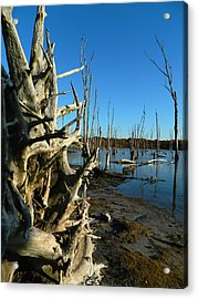 Roots Preserve Acrylic Print by  Tina McGinley