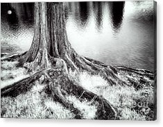 Roots Run Deep - Greensboro Nc Acrylic Print