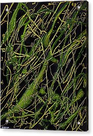 Roots Acrylic Print by Shabnam Nassir