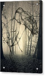 Roots That Hold  Acrylic Print