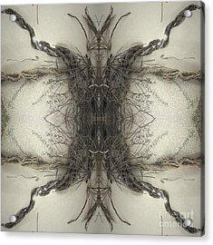 Roots Two Acrylic Print by Carina Kivisto