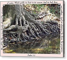Roots With Verse Psalm 1 3 Acrylic Print