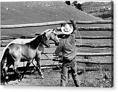 Roping The Young Ones Acrylic Print