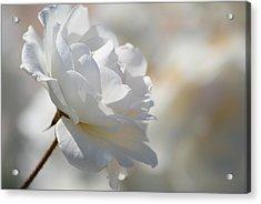 Rosa Blanca 8 Acrylic Print by Mirza Ajanovic