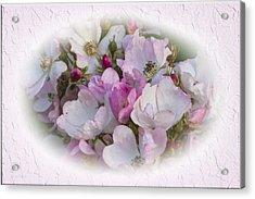 Rosa Acrylic Print by Elaine Teague