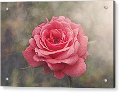 Rosalind Acrylic Print by Faith Simbeck