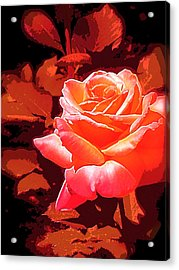Acrylic Print featuring the photograph Rose 1 by Pamela Cooper