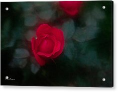 Acrylic Print featuring the photograph Rose 1 by Travis Burgess