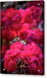 Rose 134 Acrylic Print by Pamela Cooper