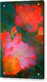 Rose 187 Acrylic Print by Pamela Cooper