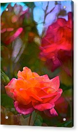 Rose 191 Acrylic Print by Pamela Cooper
