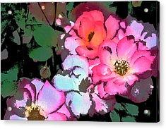 Rose 197 Acrylic Print by Pamela Cooper