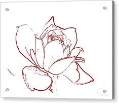 Rose 2 Acrylic Print