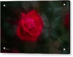 Acrylic Print featuring the photograph Rose 2 by Travis Burgess