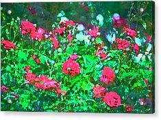 Rose 201 Acrylic Print by Pamela Cooper