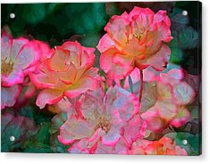 Rose 203 Acrylic Print by Pamela Cooper