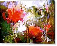 Rose 204 Acrylic Print by Pamela Cooper