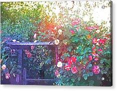 Rose 205 Acrylic Print by Pamela Cooper