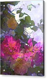 Rose 206 Acrylic Print by Pamela Cooper