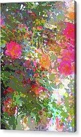 Rose 207 Acrylic Print by Pamela Cooper