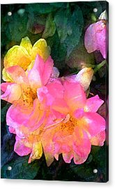 Rose 211 Acrylic Print by Pamela Cooper
