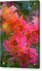 Rose 219 Acrylic Print by Pamela Cooper