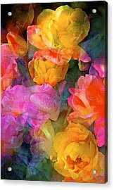 Rose 224 Acrylic Print by Pamela Cooper