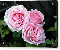 Acrylic Print featuring the photograph Rose 3 by Helene U Taylor