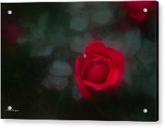Acrylic Print featuring the photograph Rose 4 by Travis Burgess