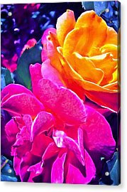 Rose 49 Acrylic Print by Pamela Cooper
