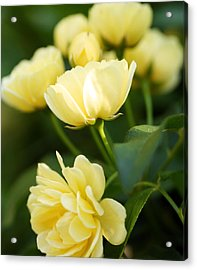 Rose 6 Acrylic Print