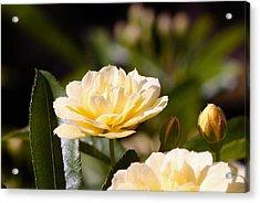 Rose 9 Acrylic Print