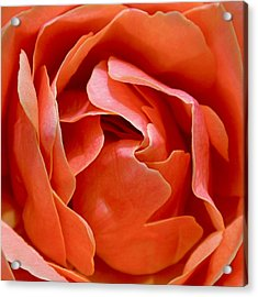 Rose Abstract Acrylic Print by Rona Black