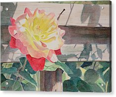 Rose Aglow Acrylic Print by Christopher Reid