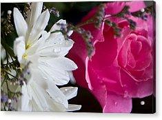 Rose And Daisy Acrylic Print by John Holloway