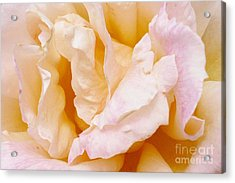 Rose Au Naturale Acrylic Print by Paul Clinkunbroomer