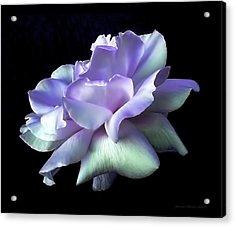 Rose Awakening Floral Acrylic Print