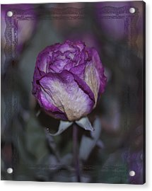 Acrylic Print featuring the photograph Rose Beauty After by Sandra Foster