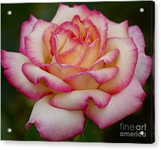 Acrylic Print featuring the photograph Rose Beauty by Debby Pueschel