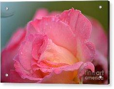 Rose Beauty Acrylic Print by Marsha Schorer