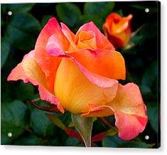 Rose Beauty Acrylic Print by Rona Black