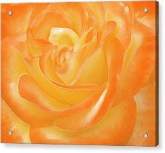 Rose Acrylic Print by Ben and Raisa Gertsberg