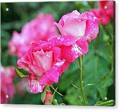 Rose Bonbons Acrylic Print by Rona Black